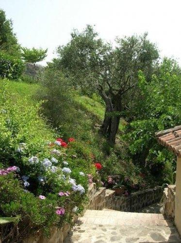 Borgo riccio torchiara salerno prenota subito - Riccio in giardino ...